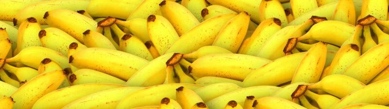 Rätsel um 100 Affen und 1600 Bananen